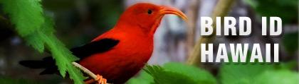Bird ID Hawaii iPad Application